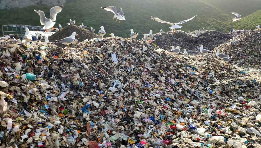 Πώς τα πλαστικά βλάπτουν τη Ζωή και το Περιβάλλον μας και γιατί η ανακύκλωση δεν είναι η λύση 3